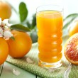 Orange juice — Foto Stock