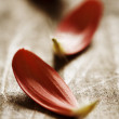 Collection of red flower-petals on wooden surfface — Stock Photo