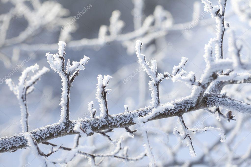 雪和冰晶体中的树枝