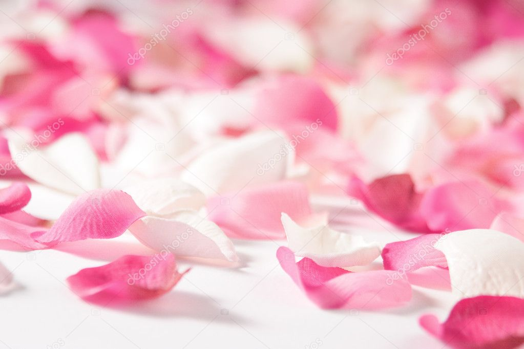 Rose petals  — Stock Photo #6363052