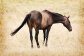 Brown Horse on Meadow — Stock Photo