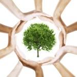 symbool van de boom met multiraciale menselijke handen eromheen — Stockfoto