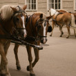 Horse-drawn carriage — Stock Photo #6433297