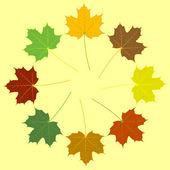 Esdoorn bladeren — Stockvector