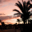 Date palm at sunrise — Stock Photo