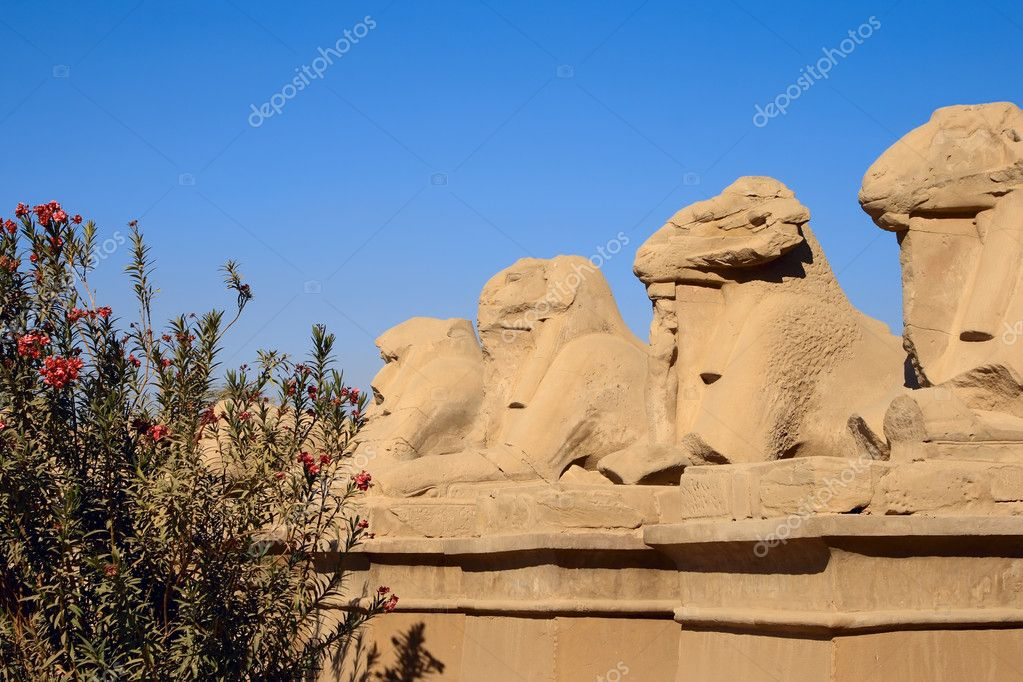 Ancient Egypt statues of sphinx in Karnak Temple Complex, Luxor — Stock Photo #6564777