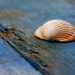 Seashells — Stock Photo #6332781