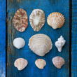 Seashells — Stock Photo #6332941