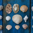 Seashells — Stock Photo #6333054