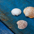 Seashells — Stock Photo #6333154