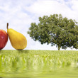 Fruit tree — Stock Photo