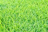 Pohled shora zelené trávy — Stock fotografie