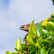 Lizard on a tree - Stock Photo