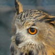 Eagle-owl — Stock Photo
