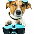 Dog with photo camera — Stock Photo #6308846
