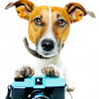 Dog using camera — Stock Photo #6315508