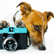 Dog using camera — Stock Photo #6315524