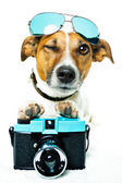 Dog cameera — Stock Photo