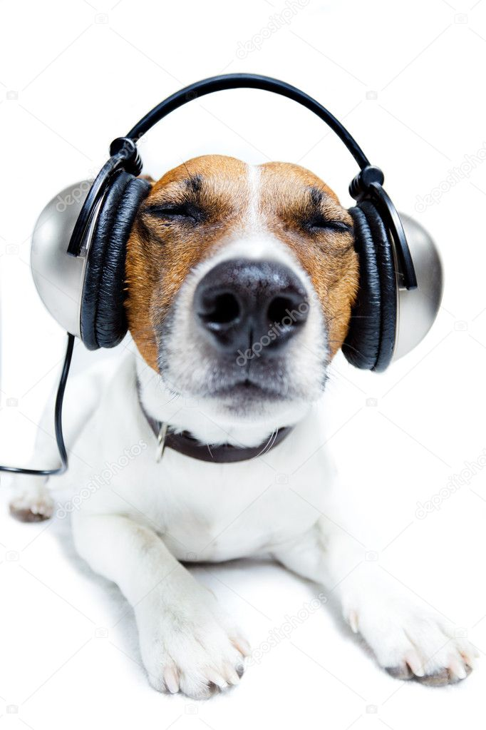Dog listening — Stock Photo © damedeeso #6315176
