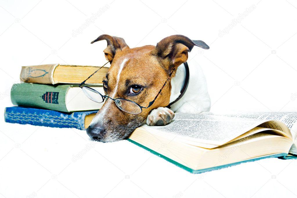 Dog learning stock image