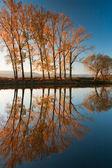 Symmetry reflection — Stock Photo