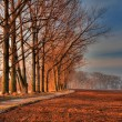 Avenue Of The Trees — Stock Photo