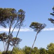 Lofty trees against blue sky — Stock Photo #6313586