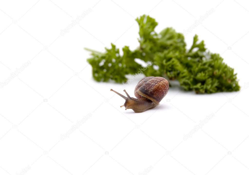 Snail creeps from a bunch of greens — Stock Photo #6364468