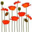 Stock Vector: Poppies