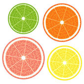 Lime, grapefruit, orange, lemon — Stock Vector