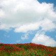 Summer meadow with red flowers and blue sky - Stock Photo