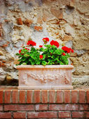 Vase of flowers on stone wall — Stock Photo