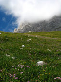 Alpine meadow with low clouds — Stock Photo
