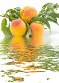 Peaches and water — Stock Photo