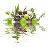 Olijven en water — Stockfoto