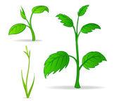 Set of green cartoon plants — Stock Vector