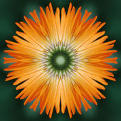 Calendula flower mandala — Stock Photo
