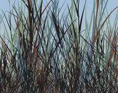 Grass jungle — Stock Vector