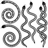 Snake designs — Stock Vector