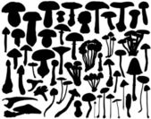 Fungi collection — Stock Vector