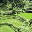 Chinese Rice Terraces — Stock Photo #6607372