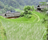Rice Terrace village — Stock Photo