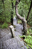 Mountain stairway in National park — Stock Photo