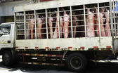 Pig Meat Truck — Stock Photo