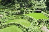 Terraços de arroz chinês — Fotografia Stock