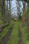 Rural path — Stock Photo