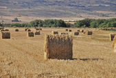 Cereal Bales — Stock Photo