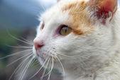 Морда кошки — Стоковое фото
