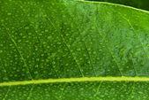 湿的叶 — 图库照片