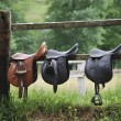 Stock Photo: Three saddles